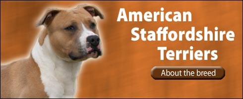 Images Of American Staffordshire Terriers Dogs Buck Wallpaper | Dog ...