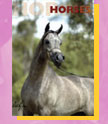 The Pet Directory Horse Section