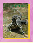 The Pet Directory Reptile Section