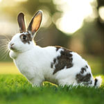 Protecting your animals the Natural Way against Myxomatosis
