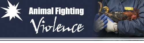 The Pet Directory Australian Industry News - Animal Fighting Violence
