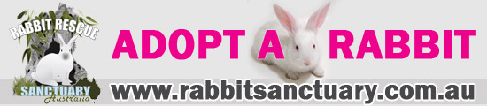 Adopt a Rabbit at Rabbit Sanctuary