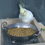 How to Get Tthe Benefits of Extruded Pellets for Your Birds Article