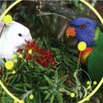 Companion Plants for Pet Birds