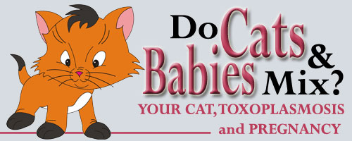 Cat article on Pregnancy, Cats, Babies and Toxoplasmosis