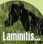 The Pet Directory Dog Article - Laminitis