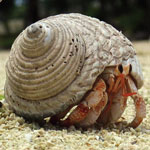 Caring For Your Hermit Crabs