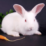 The Truth About Feeding Your Pet Rabbit