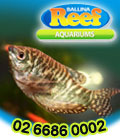 Ballina Reef Aquariums