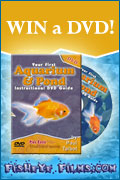 WIN A DVD! Win 'Your First Aquarium & Pond Instructional DVD Guide' by Paul Talbot! Proudly presented by FISHEYEFILMS.COM