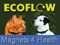 ECOFLOW are the innovators of successful Magnotherapy products for animals.
