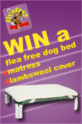 WIN a Flea Free Dog Bed + Matress + Lambswool Cover!
