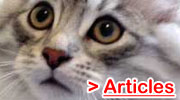 Cat Related Articles