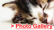 Cat Photo Gallery