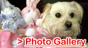 Dog Photo Gallery