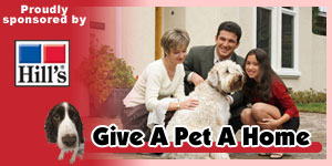 Give A Pet A Home - Give home to a pet here…