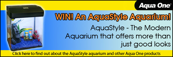 Kongs AquaStyle Aquarium Competition