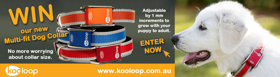 Kooloop Dog Collar Competition
