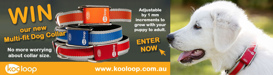 Kooloop Dog Collars Competition