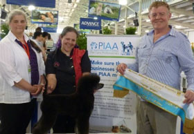 PIAA Melbourne Royal Grooming Competitions