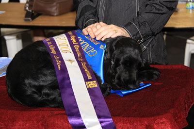 PIAA State Royal Grooming Competitions