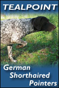 Tealpoint German Shorthaired Pointers