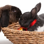 The Myth of Bunny Mateship?