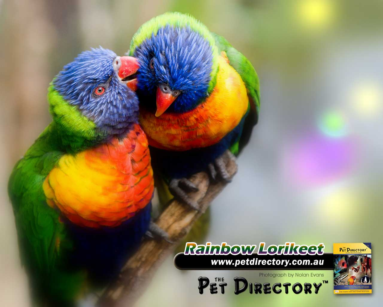 the pet directory australia: world's largest online pet directory