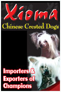 Xioma Chinese Crested Dogs