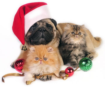 Pet Shops benefitting from economic downturn this Christmas