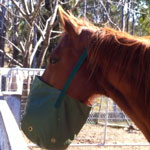 Horse Nose Feed Bag