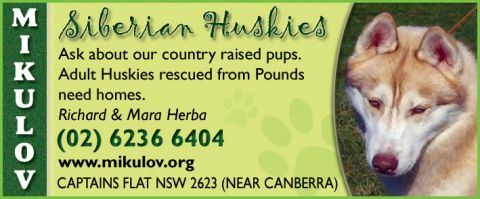 Dog Rescue Service - Siberian Huskies listing image or logo