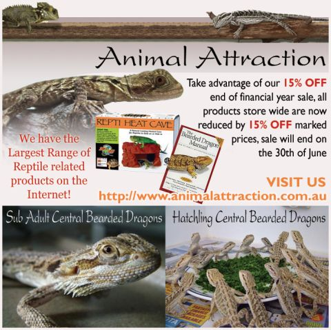 Animal Attraction listing image or logo