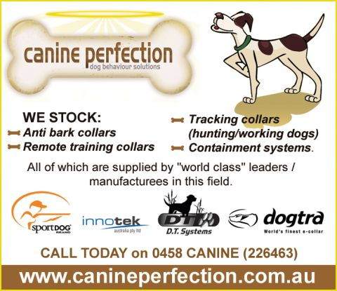 Canine Perfection listing image or logo