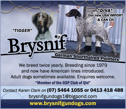 Brysnif Gundogs -  German Shorthaired Pointers listing image or logo