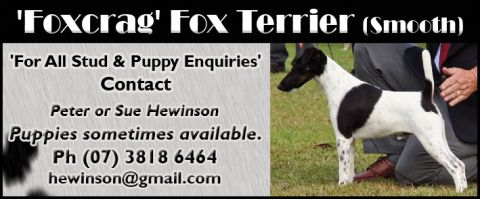 Foxcrag Fox Terrier Smooth listing image or logo