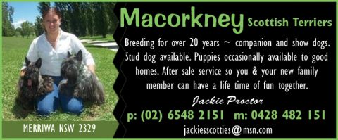 Macorkney Scottish Terriers listing image or logo