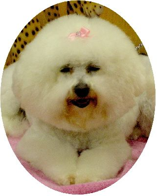 The pet directory australia dogs groomers worlds largest online wags dog grooming salon solutioingenieria Gallery
