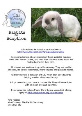 Adopt A Rabbit: Rabbits for Adoption or Foster Care