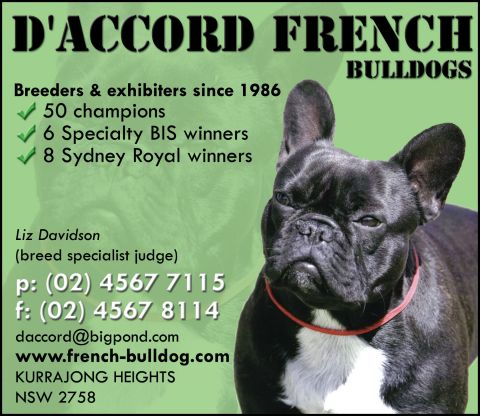D'Accord - French Bulldogs : French Bulldog : Breeders : Dogs : Pet
