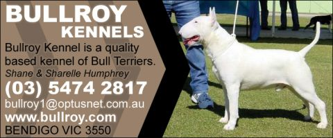 Bullroy Kennels - Bull Terriers listing image or logo