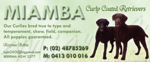 Miamba Curly Coated Retrievers  listing image or logo
