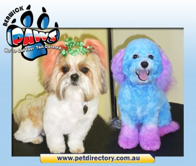 Dog Grooming by Berwick Paws