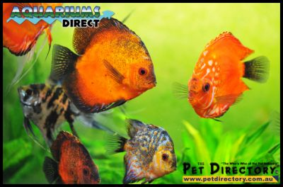 Aquariums Direct