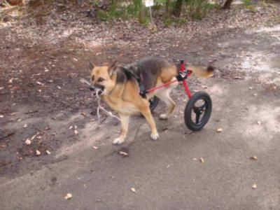 K9 Cart Wheelchairs for special needs 1