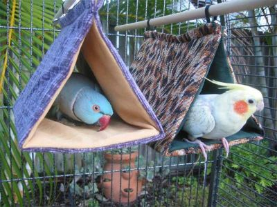 Bird Bunks