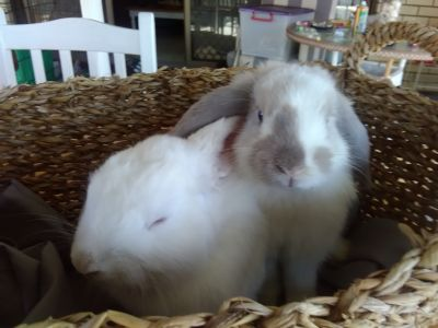 GABE and GABBY - LOPS - Adoption pending TWEED HEADS