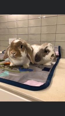 BRUCE and SMOOTHIE - LOPS - SOUTH MELBOURNE