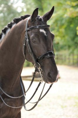 Amerigo Patent Double Bridle with Reins