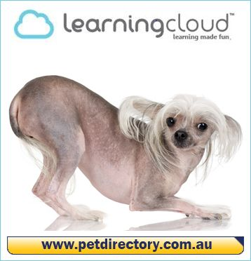 Do you love animals? Pet & Animal Care Courses is available at Learning Cloud 2